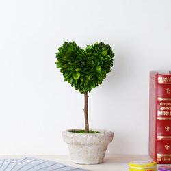 bokkusuuddopiari_foliageplant_furniture