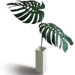 foliageplant_monsteradeliciosa