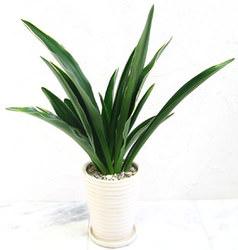 omoto_grass_foliageplant_furniture